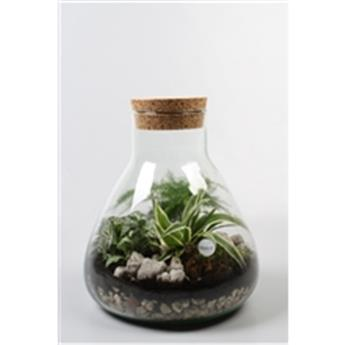 PLANTES VERTES D30 P Terrarium REF-90077 MIX