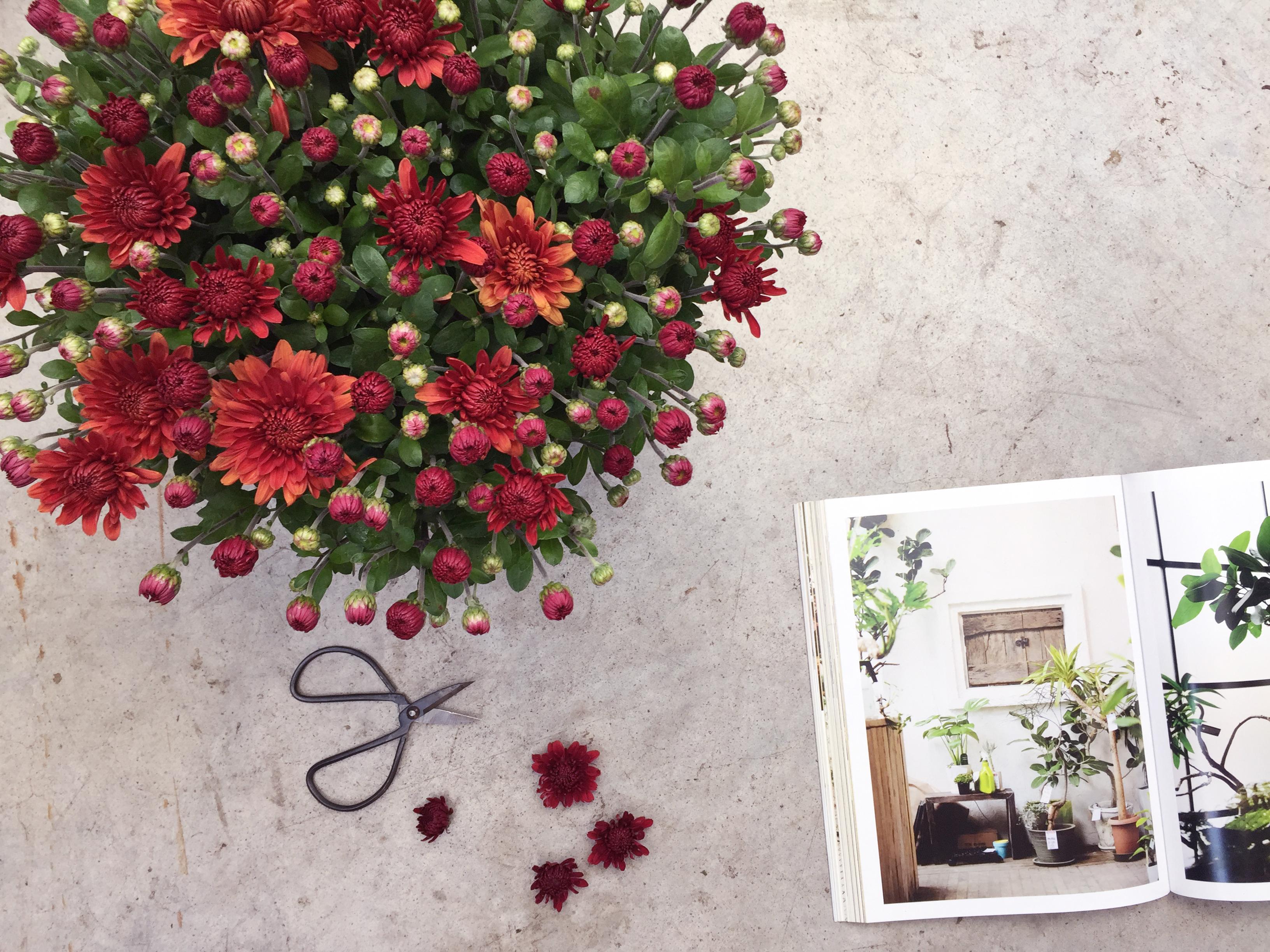 Le Chrysanthème, le Végétal du moment